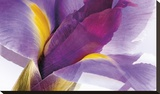 Iris Rising Stretched Canvas Print by Harold Davis