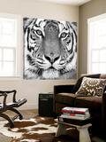 Tiger Art by  PhotoINC Studio