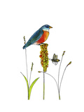 Bluebird on Seeds Lámina giclée por Blenda Tyvoll