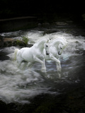 Dream Horses 070 Fotografie-Druck von Bob Langrish
