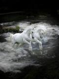 Dream Horses 070 Lámina fotográfica por Bob Langrish