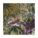 King Bird of Paradise Reproduction procédé giclée par Bill Jackson