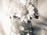 Summer Mums BW Fotografisk trykk av Bob Rouse