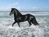 Dream Horses 015 Fotografisk tryk af Bob Langrish