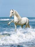 Dream Horses 097 Fotografie-Druck von Bob Langrish