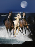 Dream Horses 080 Reproduction photographique par Bob Langrish