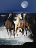 Dream Horses 080 Fotografisk tryk af Bob Langrish