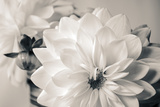 White Beauty BW Photographic Print by Bob Rouse
