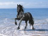 Dream Horses 095 Fotografie-Druck von Bob Langrish