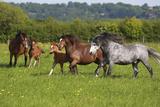 Farm UK 005 Fotografisk tryk af Bob Langrish