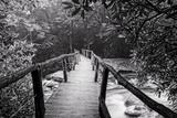 Wooden Bridge in Fog BW Fotografisk trykk av Bob Rouse