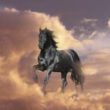 Dream Horses 058 Fotografisk tryk af Bob Langrish