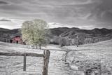 Small Creek BW Fotografisk trykk av Bob Rouse