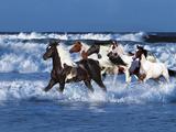 Dream Horses 042 Lámina fotográfica por Bob Langrish