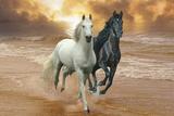 Dream Horses 046 Fotografisk tryk af Bob Langrish