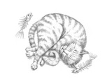 Cat Nap Pencil Giclee Print by Jeff Haynie