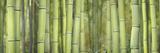 Bamboo Scape Fotografisk tryk af Cora Niele