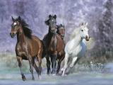 Dream Horses 027 Fotografie-Druck von Bob Langrish