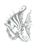 Aquatic Fish 2 Pencil Giclee Print by Jeff Haynie