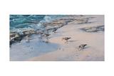 Bécasseaux des sables Reproduction procédé giclée par Michael Jackson