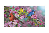 Songbird Colors Giclee Print by Jeffrey Hoff