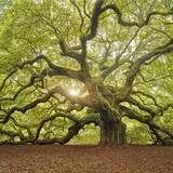 The Tree Square-Edit OL Fotografie-Druck von Moises Levy