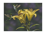 Yellow Lilies Giclee Print by Jeffrey Hoff