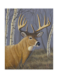Sunlit Whitetail Giclee Print by Jeffrey Hoff