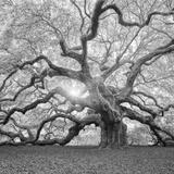 The Tree Square-BW 2 Fotografisk trykk av Moises Levy