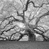The Tree Square-BW 2 Photographic Print by Moises Levy