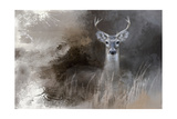 Buck in the Shadows Giclee Print by Jai Johnson