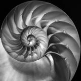 Nautilus 2 Photographic Print by Moises Levy