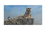 Tiger on Rock Giclee-trykk av Jackson, Michael