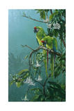 Buffons Macaws Giclee-trykk av Jackson, Michael