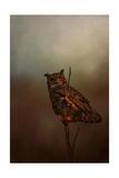Owl in the Marsh Reproduction procédé giclée par Jai Johnson