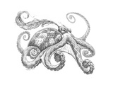 Aquatic Octopus Pencil Giclee Print by Jeff Haynie