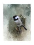 Winter Chickadee Reproduction procédé giclée par Jai Johnson