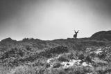Elk Photographic Print by  Pixie Pics