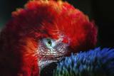 Bird Stampa fotografica di  Pixie Pics