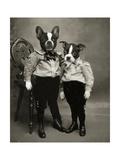 Boston Terrier Giclée-Druck von  J Hovenstine Studios