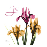 Pink Iris Joy Arte di Albert Koetsier
