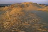Sand Dunes Covered with Beach Grass Fotografisk trykk av Norbert Rosing