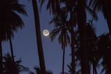 Moonrise in the Kapuaiwa Coconut Grove, Molokai, Hawaii Fotografisk trykk av Jonathan Kingston