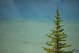 A Lone Pine Tree in Banff National Park Fotografisk tryk af John Burcham