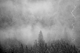Morning Fog Rises Off of a Spruce, Picea, Forest in Alaska's Inside Passage Photographic Print by Erika Skogg