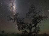 The Milky Way Above a Tree in Australia Fotografisk tryk af Babak Tafreshi