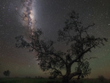 The Milky Way Above a Tree in Australia Photographic Print by Babak Tafreshi