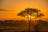 Sunset in Serengeti National Park Fotografisk trykk av Tom Murphy