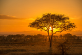 Sunset in Serengeti National Park Photographic Print by Tom Murphy