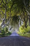 A Treelined Road in Ballymoney, County Antrim, Northern Ireland 写真プリント : Jonathan Irish